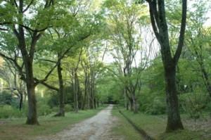 植物園のメイン園路にそって広がる日本産樹木見本園。
